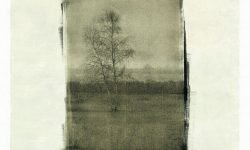 Kalamahara_Greener_Fields_by_Andreas_Schlesinger_300dpi